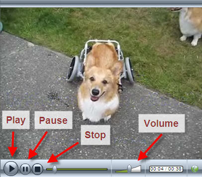 Common On-line Video Player