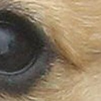 Puppy Eye, magnified 2 times