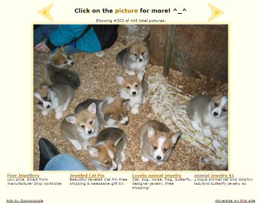 Stolen Corgi Puppies Photo